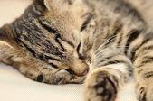 Sleeping kitten — Stock Photo