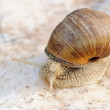 Small snail - Stock Photo