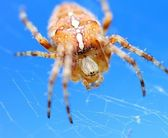 Spider — Stock Photo