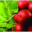 Foto Stock: Fresh red radish