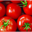 The fresh red tomato — Stock Photo