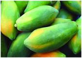 The fresh sweet mango — Stock Photo