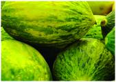 The fresh sweet melon — Stock Photo