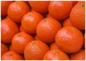 The fresh colorful tangerines — Stock Photo