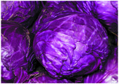 The fresh blue cabbage — Stock Photo