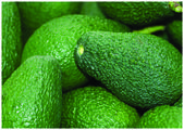 The fresh avocado — Stock fotografie