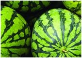A melancia colorida — Foto Stock