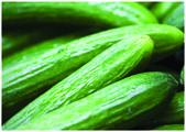 The fresh green cucumbers — Stock Photo