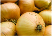 The fresh Onion — Stock Photo