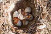 Vogeltjes — Stockfoto
