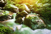 Forest stream with a waterfall — Stock Photo