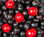 Ripe berries of cherry and black currant — Stock Photo