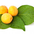 Stock Photo: Apricot fruits with leaves isolated on white