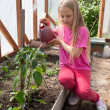 Girl Watering The Tomato Plants — Stock Photo #11962945