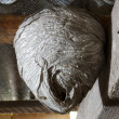 Wasp nest — Stock Photo