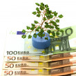 Euro and tree — Stock Photo