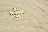 Beach with starfishes — Stock Photo