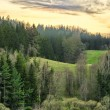 Hills with forest — Foto Stock
