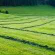 Agricultural scenery — Stock Photo