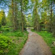 Royalty-Free Stock Photo: Path in the  forest