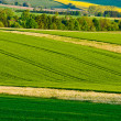 Green agricultural scenery — Stock Photo