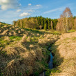 Landscape with stream — Stock Photo