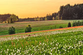 Spring flowered meadow — Stock Photo
