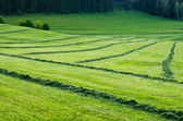 Paisagem agrícola — Foto Stock