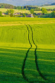 Agricultural scenery with the trace — Stock Photo