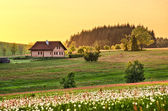 Spring meadow with cottage — Stock Photo