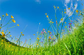 Wild flowers in the grass — Stock Photo