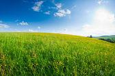Meadow with wild flowers — Stock Photo