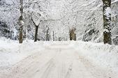 Road during the winter — Stockfoto