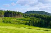 łąka i las — Zdjęcie stockowe