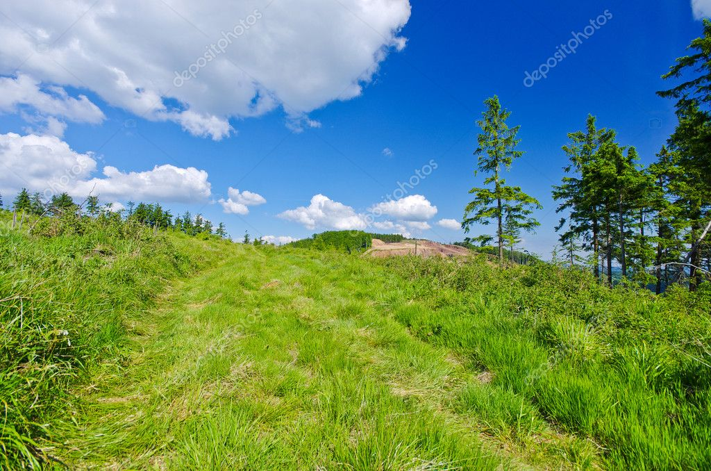 Landscape with green grass and blue sky — Stock Photo #12007917