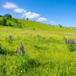Stock Photo: Landscape with lupines