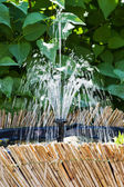 Fountain in the garden — Stock Photo