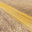 Tracks in field — Stockfoto #12365899