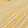 Stock Photo: Bale of straw on field