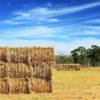 Mown hay harvested in large briquettes — Stockfoto #10908919