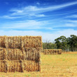 Foto Stock: Mown hay harvested in large briquettes