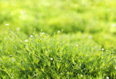 Green grass carpet — Foto Stock