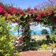 Stock Photo: Pergolwith blooming bougainvillea