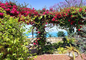 Pergola with blooming bougainvillea — Stock Photo