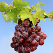 Stock Photo: Bunch of red grapes