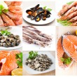 Collage of photos from the fishery products — Stock Photo