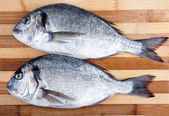 Two fresh sea bream on a cutting board — Stock Photo