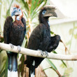 Species of birds hornbills - Stock Photo