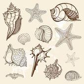 Sea collection. Hand drawn vector illustration — Stock Vector