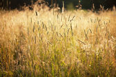 High grass — Stock Photo